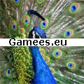 Gimme5 - Wildlife SWF Game